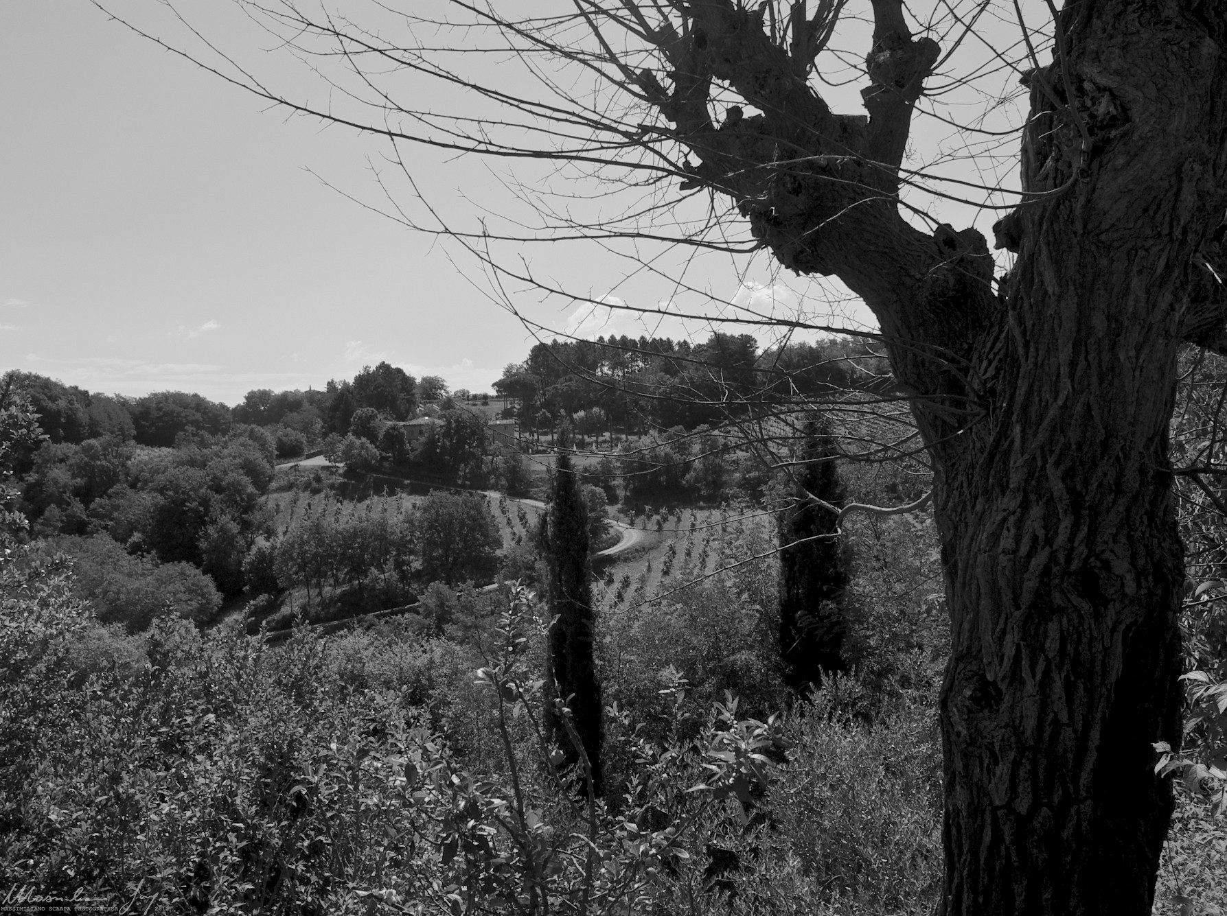 Montevarchi Caposelvi Massimiliano Scarpa Photography