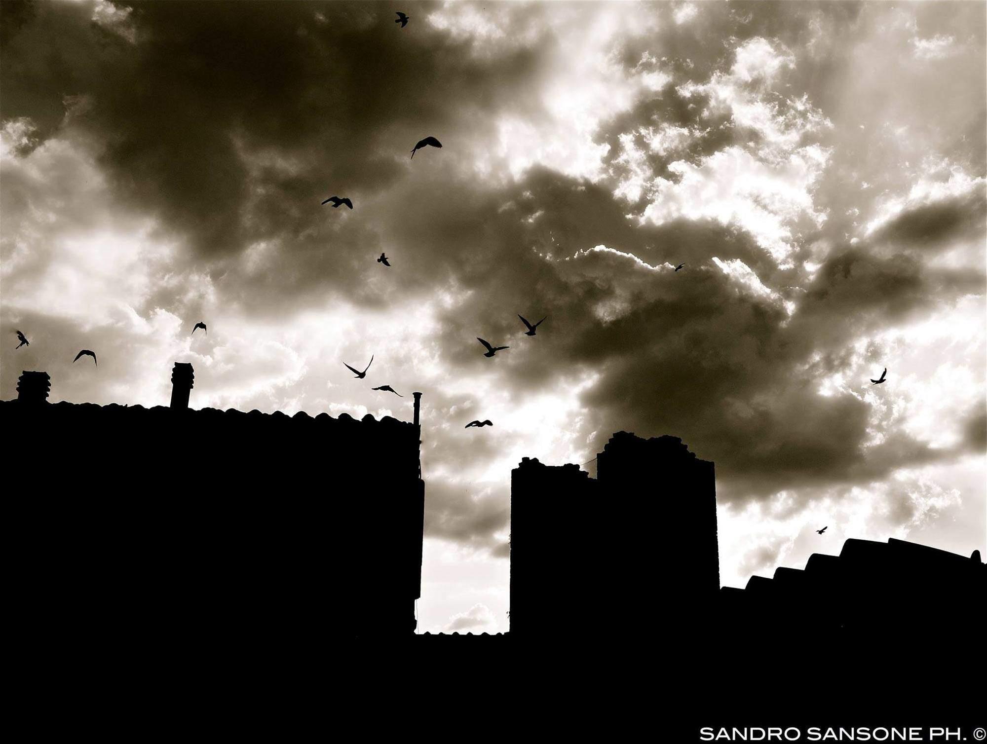 Sandro-Sansone_002